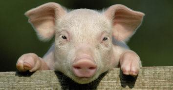 Schweinderl ITW 5 Jahre