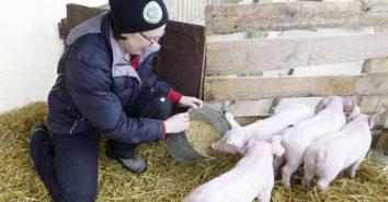Ponnath Tierschutz Schweine