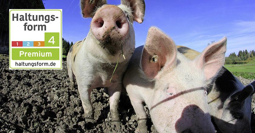 Schweine Haltungsform Kennzeichnung