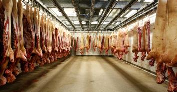 Schweinefleisch Belgian Meat Office Export