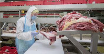 BGN Studie Corona Fleischwirtschaft