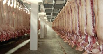 Belgien Schwein Rind Schlachtung 2020 Bilanz