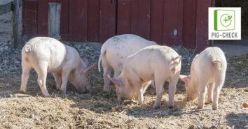 Pig-Check App Kupierverzicht Schweine